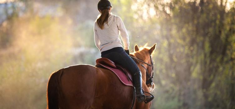 horse-riding school